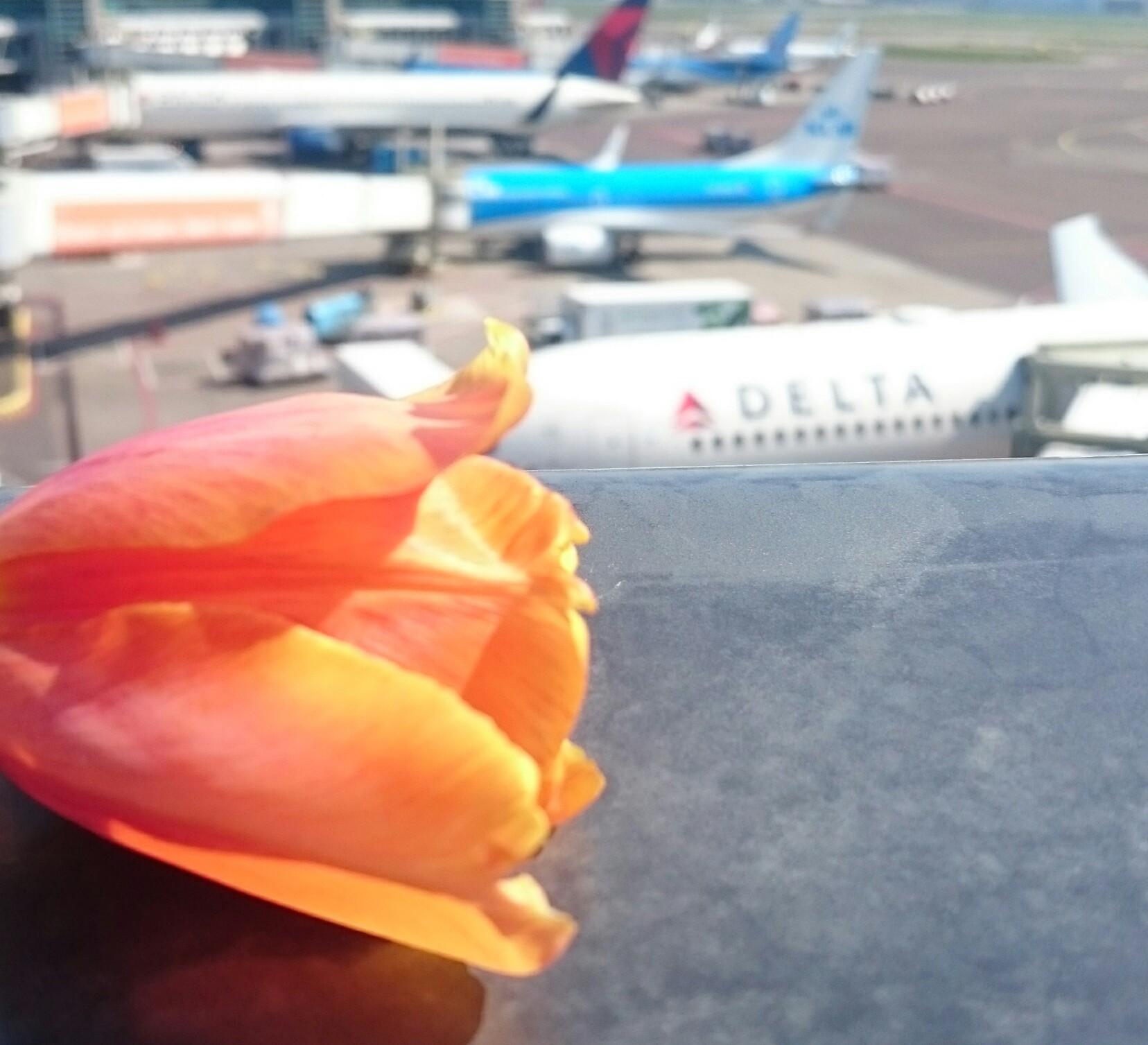 De Tulipa Schiphol van dichtbij.