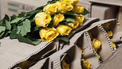 Photo of KLM en Lufthansa bezorgen rozen op Valentijnsdag