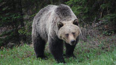 Photo of Weer (Russische) beren op de weg voor Air Belgium