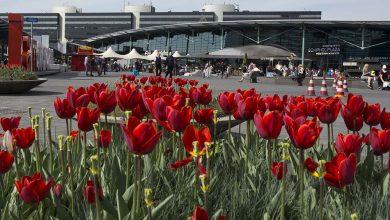 Photo of Aantal passagiers en vliegbewegingen Schiphol nagenoeg stabiel