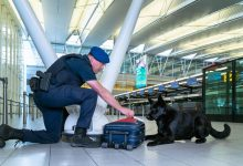 Photo of Kroaat opgepakt op Schiphol na valse bommelding